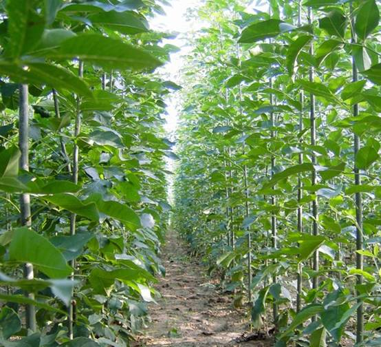 白蜡植物物种与环境之间的关系